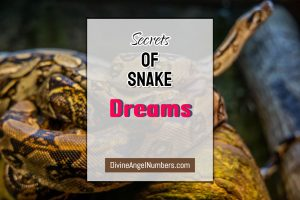 What Does it Mean When You Have Dreams About Snakes?