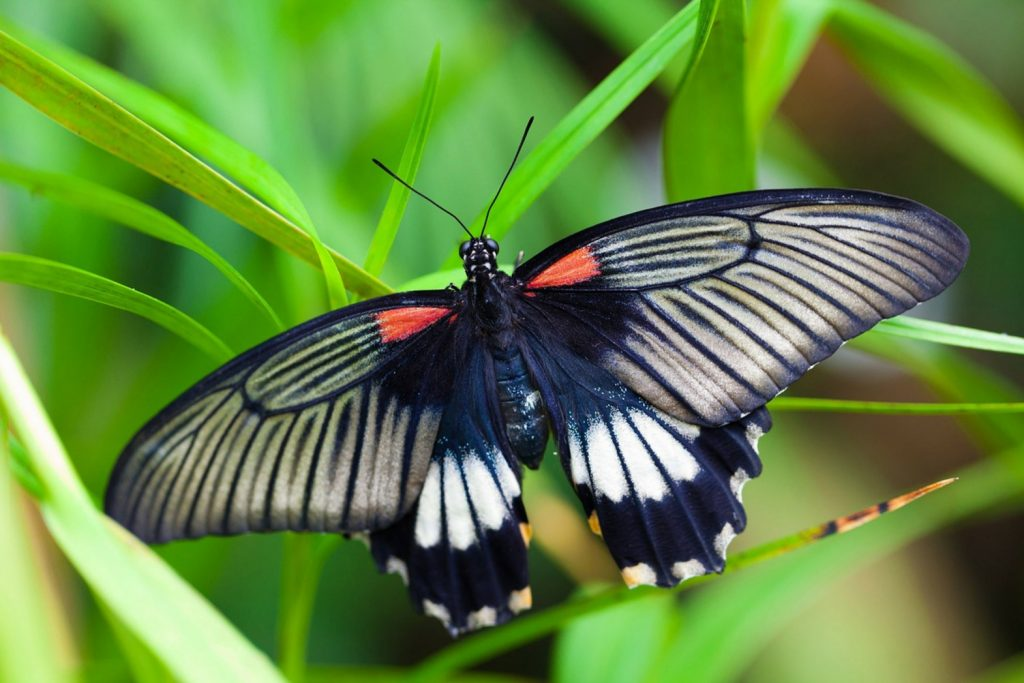 Spiritual Meaning Of Black Butterfly