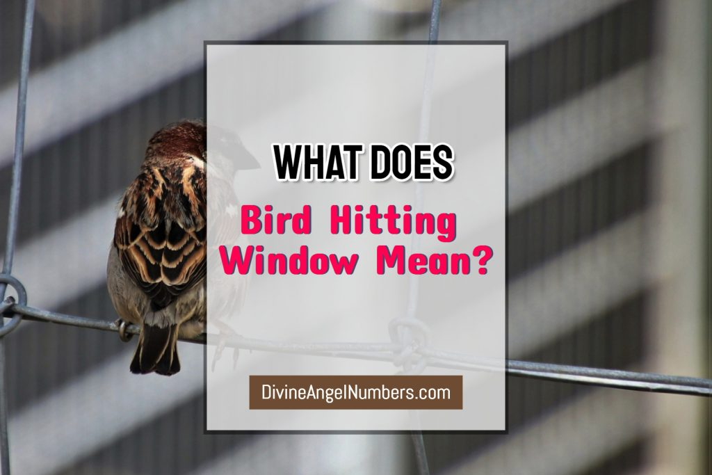 What Does Bird Hitting Window Mean?