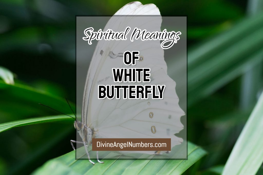 White Butterfly Meaning - Symbolic & Spiritual