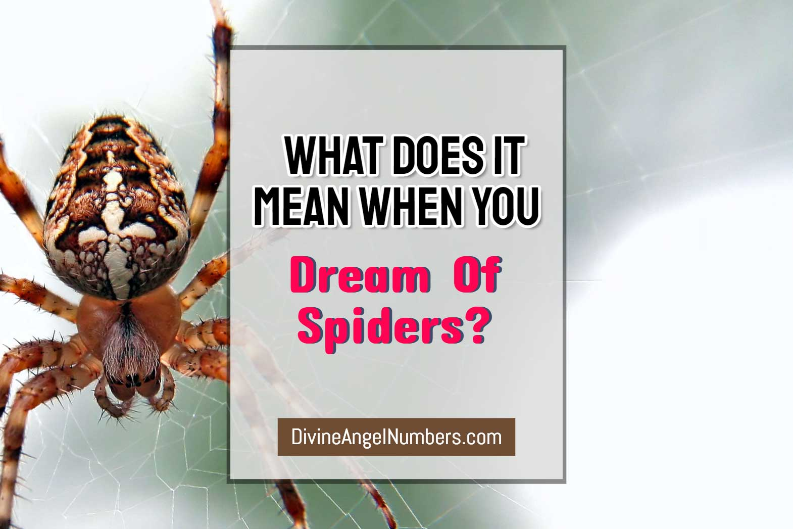 Dream About Spiders